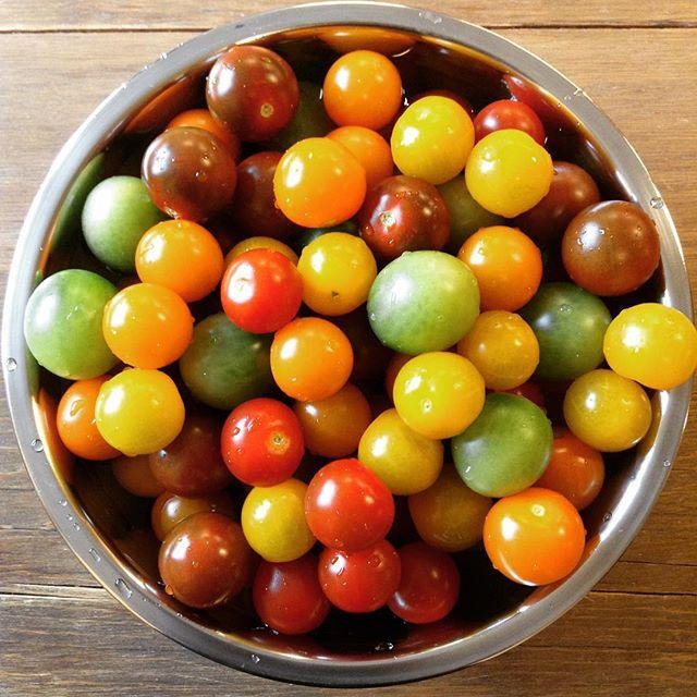 カラフルなトマトキレイな色のトマトたち。夏らしいですね!ドライトマトにしようか…マリネにしようか…迷ってしまいます。#トマト#カラートマト#ドライトマト#マリネ#アンデコ#レストラン#ランチ#fukushima#kooriyama #undeco#小田原屋漬物店#小田原屋#お漬物バイキング#漬物#お漬物#つけもの#おつけもの#和食#japanesetraditionalfood#otsukemono#food#japanese#baiking#japanesefood#tsukemono#japanfood#foodgasm#foodies#foodie#japanesetradition